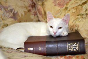 Duchess&Bible